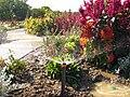 The TNU Botanical Garden in Simferopol, Crimea, Ukraine 08.JPG