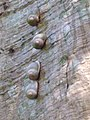 The art of snails.jpg
