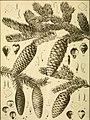 The botanical magazine = Shokubutsugaku zasshi (1913) (20392776432).jpg
