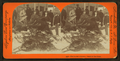 The hunter's return - result of the chase, from Robert N. Dennis collection of stereoscopic views.png