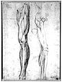 The muscles of the left leg, seen from the front, and the bo Wellcome L0019487.jpg