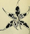 The orchid-grower's manual - containing descriptions of the best species and varieties of orchidaceous plants (1885) (14768457774).jpg