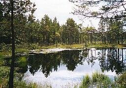 Tjärn i Store Mosse nationalpark.