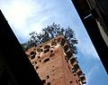 Torre Guinigi des de baix.JPG