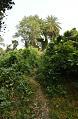 Track Towards Manasa Mound Top - Western Side - Manasapota - Simurali 2016-12-18 2175-2178.tif