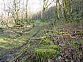 Track in natural woodland - geograph.org.uk - 689569.jpg