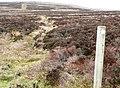 Track on Mynydd Varteg Fawr - geograph.org.uk - 678870.jpg