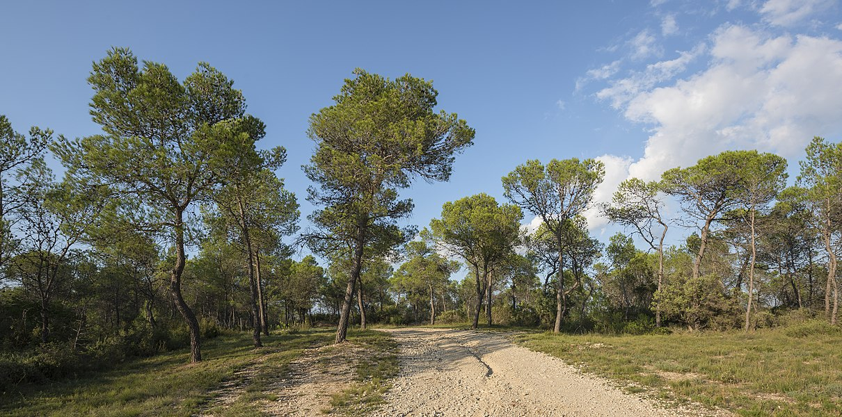 A trail in the Domaine départemental de Restinclières. Prades-le-Lez, Hérault, France.