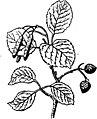 Trattato completo di agricoltura I fig067.jpg