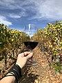 Truchard Vineyards - Nov 2018 - Stierch 03.jpg