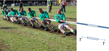 9 men in the Irish champion tug of war team pull on a rope. The rope in the photo extends into a cartoon showing adjacent segments of the rope. One segment is duplicated in a free body diagram showing a pair of action-reaction forces of magnitude T pulling the segment in opposite directions, where T is transmitted axially and is called the tension force. This end of the rope is pulling the tug of war team to the right. Each segment of the rope is pulled apart by the two neighboring segments, stressing the segment in what is also called tension, which can change along the too football fields members.