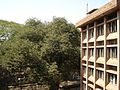 Udayan High School View 2.jpg