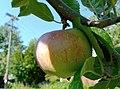 Une pomme (6147737896).jpg