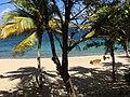 Unnamed Road, British Virgin Islands - panoramio (155).jpg