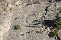 Uplifted sedimentary rock along the Gardner River (398f32a0-3071-4eac-b594-770033745516).jpg