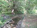 Upper Pine Bottom State Park Run 3.jpg