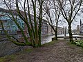 Urban trees in winter, along the canal water, Amsterdam city.jpg