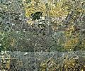 Utsunomiya city center area Aerial photograph.1974.jpg