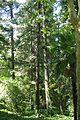 VIEW , ®'s - DigiGraf - Ð - ┼ , MADRID JARDIN-PARQUE CAMPO del MORO - panoramio (21).jpg