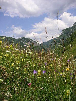 Grădiștea Muncelului-Cioclovina Natural Park - Șureanu Mountains