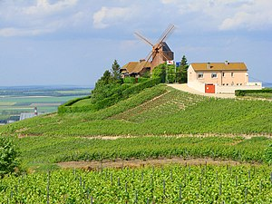 Champagne (wine region) - Champagne vineyards in Verzenay in the Montagne de Reims subregion