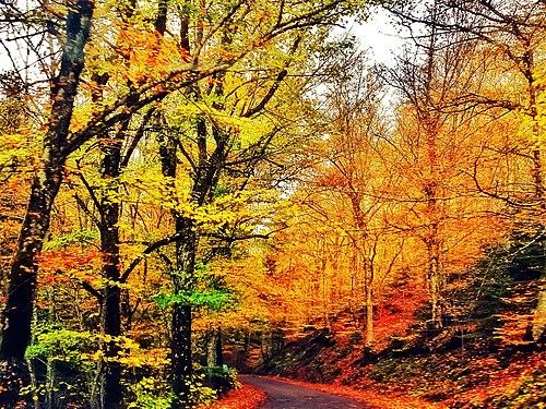 Viaggiando verso la Secchieta - Foresta di Sant'Antonio in autunno - Vallombrosa (Reggello - Fi).jpg
