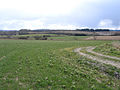 View SE from Carey's Hollow, South Petherton, Somerset - geograph.org.uk - 133719.jpg