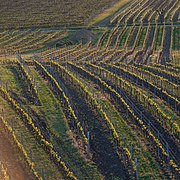 View of vineyards from Slunečná observation tower 2020 03.jpg