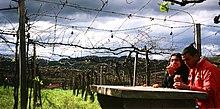 220px Vinicola rio grande do sul %281701423442%29