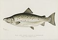Vintage illustrations by Denton from Game Birds and Fishes of North America digitally enhanced by rawpixel 13.jpg