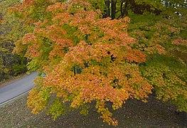Vista desde la torre de observación, Parque Estatal Brown County, Indiana, Estados Unidos, 2012-10-14, DD 09.jpg