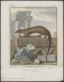 Viverra ichneumon - 1700-1880 - Print - Iconographia Zoologica - Special Collections University of Amsterdam - UBA01 IZ22400075.tif