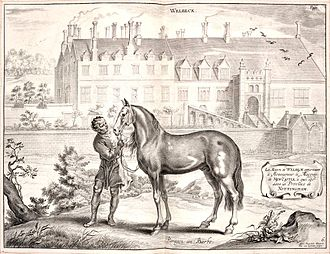 Pryor Mountain Mustang - A 17th-century engraving of a Barb horse