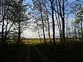 Waldrand zwischen Lustadt und Westheim - geo.hlipp.de - 24606.jpg