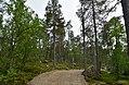 Walking trail, Inari, Finland (10) (35848976794).jpg