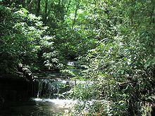 A Waterfall On Carrick Creek Nature Trail