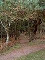 Webbers Post, The woods - geograph.org.uk - 98775.jpg