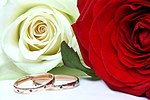 Wedding rings and roses.jpg