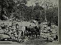 Western field (1905) (14779060572).jpg