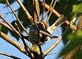 Wildlife birds 18 - West Virginia - ForestWander.jpg