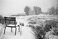 Wilhelminenaue in winter.jpg