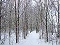 Winter wonderland - geograph.org.uk - 1658280.jpg
