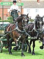 Worstead Festival 2008 - a pair of Percheron horses - geograph.org.uk - 897780.jpg