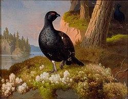 WRIGHT, Ferdinand von: Black Grouses 1864