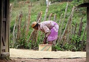 Zafimaniry - Zafimaniry woman drying rice