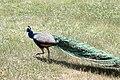 Zoo de la Barben 20100605 065.jpg