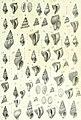 Zoologische Jahrbücher (1905) (14778198331).jpg