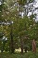 """""""Зелені мешканці"""" чудового парку навколо колишньої літньої садиби Гаєвських-Жебрівських, дбайливо збережені мешканцями с. Руда.jpg"""
