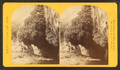 """The Bath,"" a dripping spring in Kanab Cañon. Temperature 69° Fahr, from Robert N. Dennis collection of stereoscopic views.png"