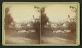 (Herd of goats on a farm) near Tallahassee, Fla, from Robert N. Dennis collection of stereoscopic views.png